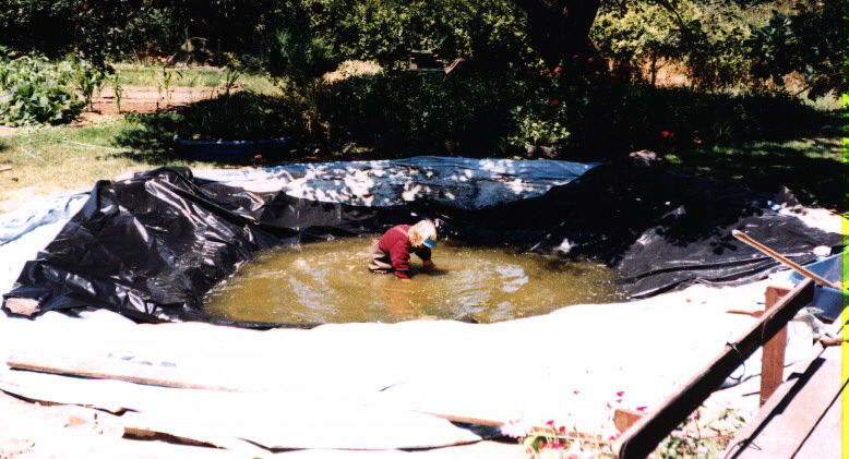 Pond pictures for Blue koi pond liner
