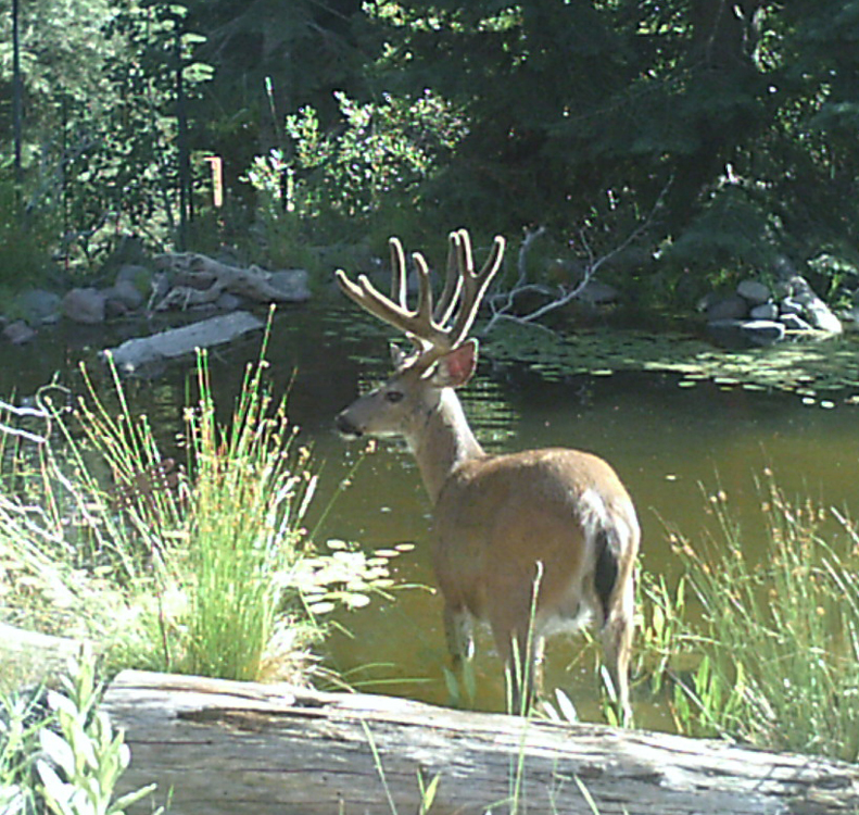 Critters At Our Shasta Pond