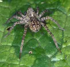 How Long Can Tarantulas Live Without Food Or Water